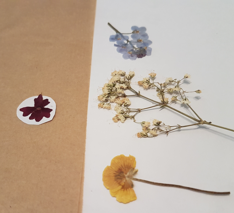 pressed flowers confarreo